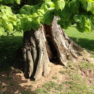 Cracking tree