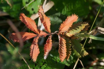 Brown leaf in green
