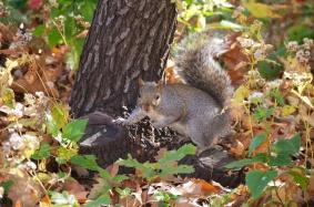 Squirrel 002