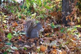 Squirrel 004