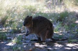 Rotnest Island - Australia