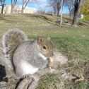 Squirrel Knows He's in the Photo