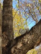 White Squirrel in a Tree